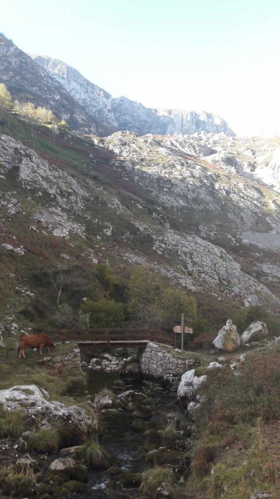 Ruta_de Poncebos_a Bulnes_por_el_canal_del_Texu