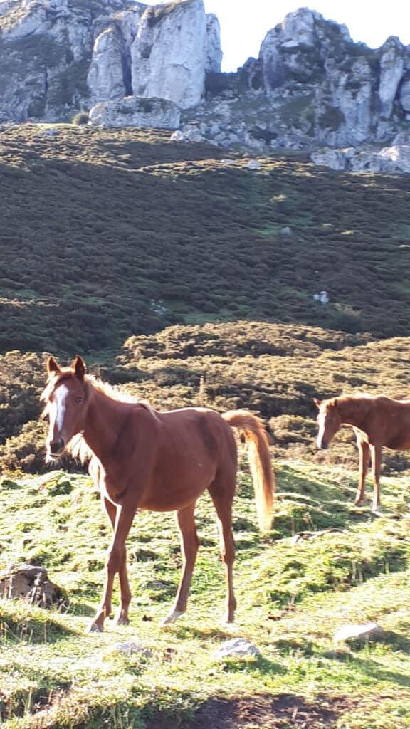 caballos_salvajes_lago_Ercina_Covadonga_marcosplanet