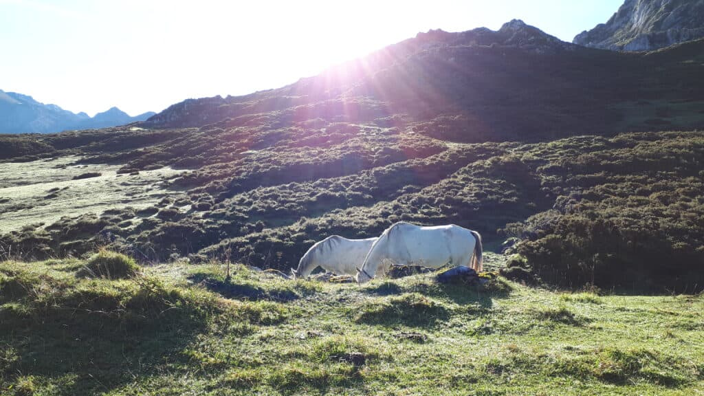 caballos_salvajes_astures_majadas_ercina_marcosplanet