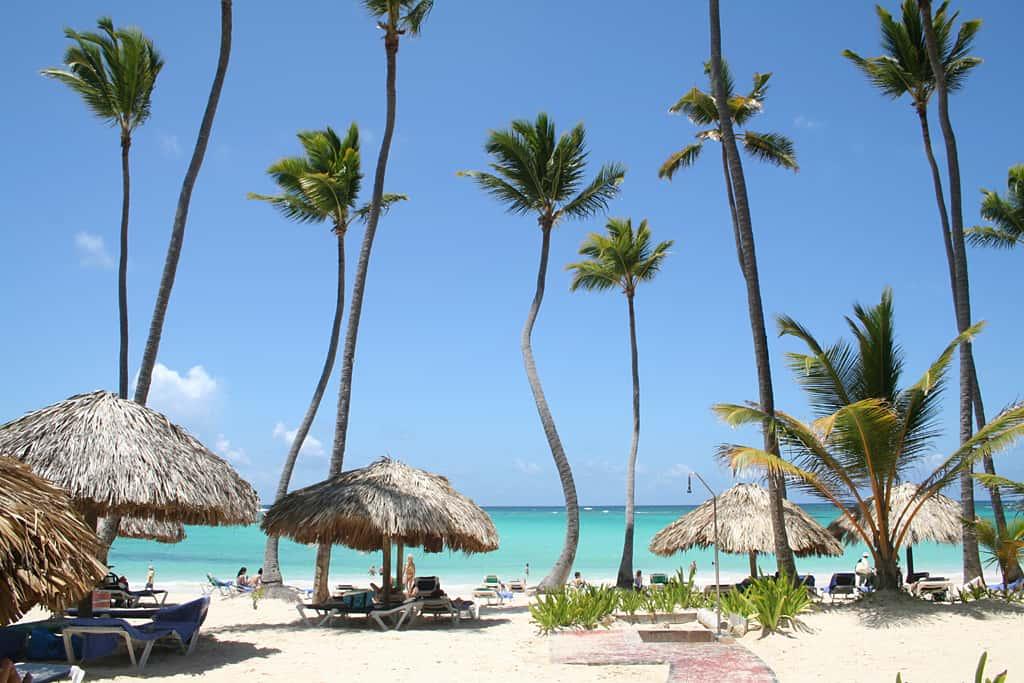 cocoteros-en-Punta-Cana